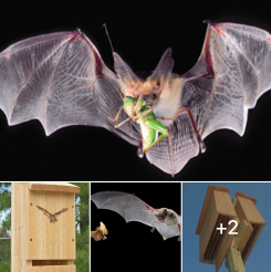 Off Grid Living - How to Build a Bat House to Attract Bats in Order to Control Bugs and Insects