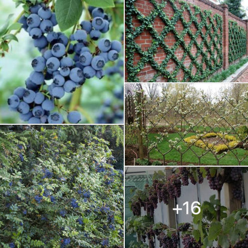 Off Grid Living - The Best Plants to Grow a Natural Fence
